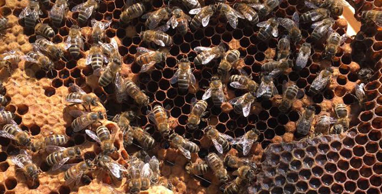 Bannière Le miel de l'ECPAD